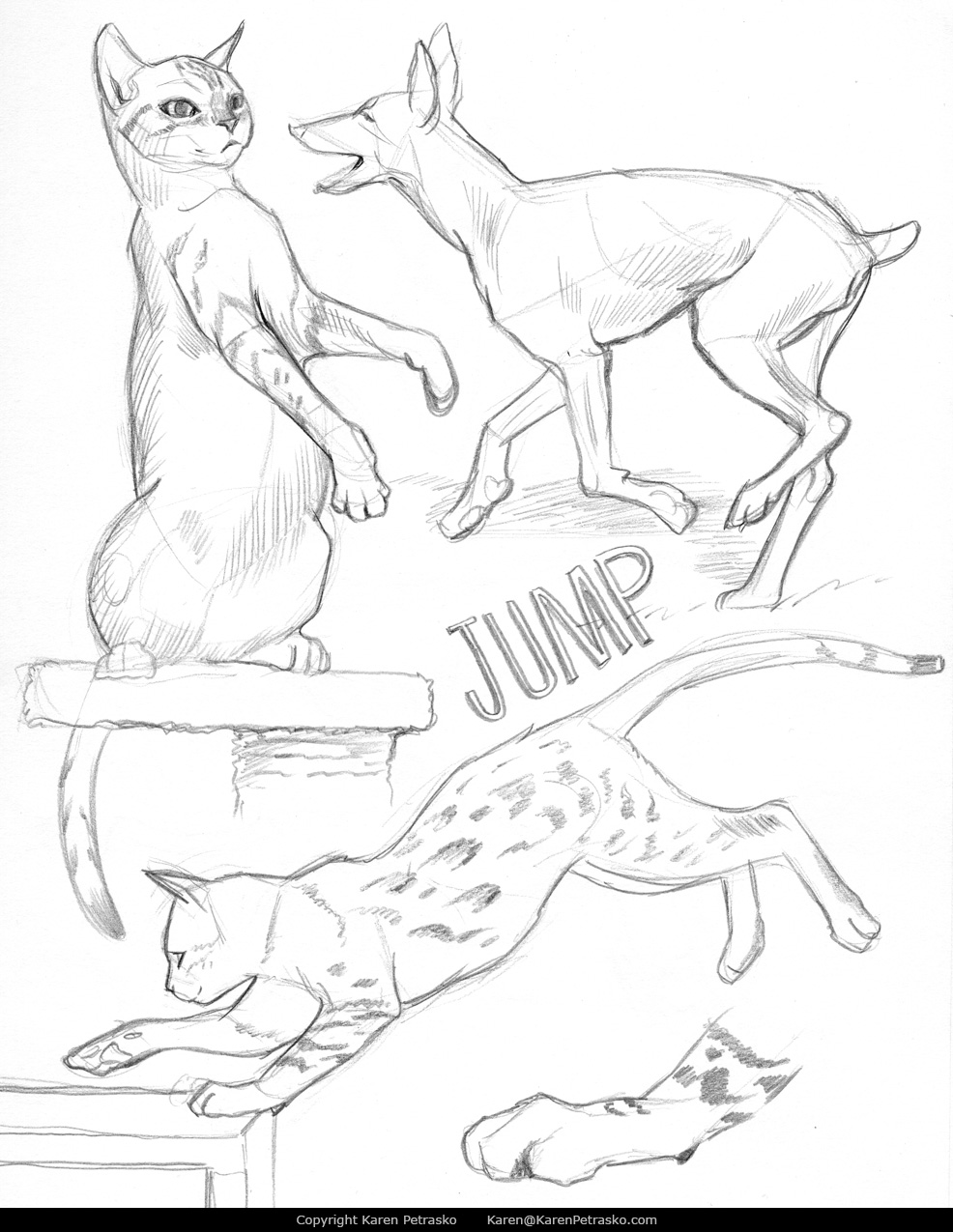 Cat and dog anatomy sketches